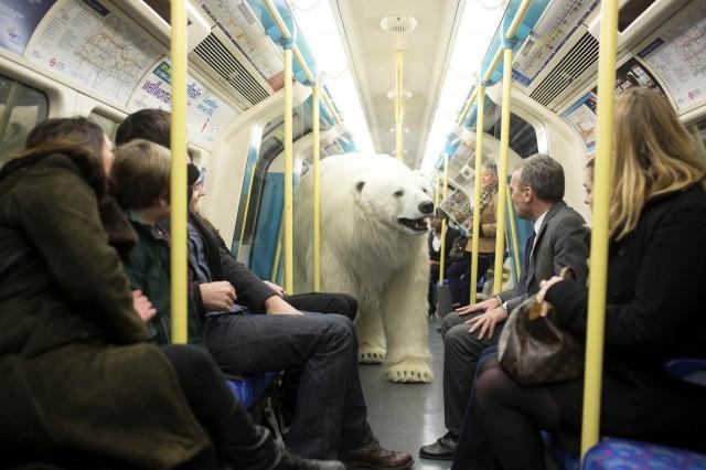 orso polare nel tube di londra